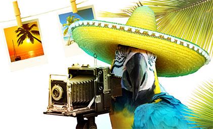 Onlineshop Content Bild - Fotodesign Papagei