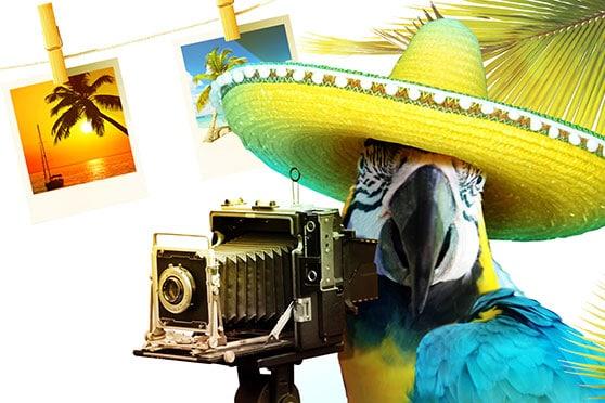 Fotodesign Content Bild - Papagei als Fotograf Bilder auf der Leine