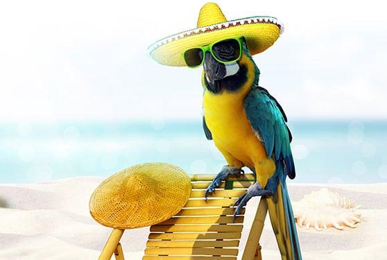 Fotodesign Content Bild - Papagei am Strand mit Sombrero