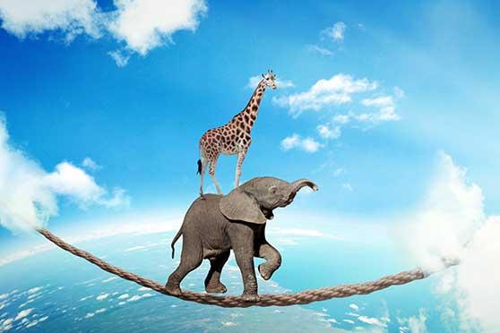 Medien und Werbeagentur Content Bild - Vertrauen Elefant und Giraffe am Seiltanzen